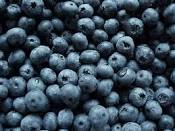 images of blueberries